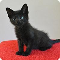 Adopt A Pet :: Anson - Springfield, IL