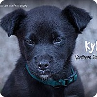 Adopt A Pet :: Kyle - Southington, CT
