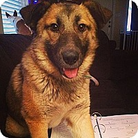 Adopt A Pet :: Dallas - Saskatoon, SK