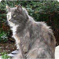 Adopt A Pet :: Shirley - Kirkwood, DE