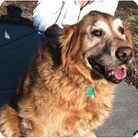 Adopt A Pet :: Kipper - Denver, CO