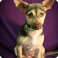 Adopt A Pet :: Lindsey - Broomfield, CO