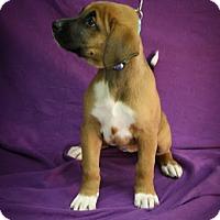 Adopt A Pet :: Long Tall Sally - Broomfield, CO