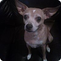 Adopt A Pet :: Woody - richmond, VA