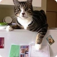 Adopt A Pet :: Bits - Vancouver, BC