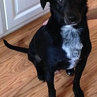 Adopt A Pet :: Coal - Harrison, NY