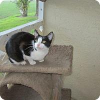 Adopt A Pet :: Cookie - Seminole, FL