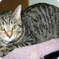 Adopt A Pet :: Palani - Powell, OH