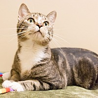 Adopt A Pet :: Ford - Chicago, IL