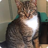 Adopt A Pet :: Tundra - Hayes, VA