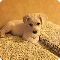 Adopt A Pet :: George - Los Angeles, CA