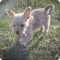 Adopt A Pet :: Java - Anderson, SC