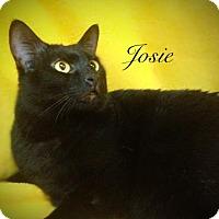 Adopt A Pet :: Josie - Newport, KY
