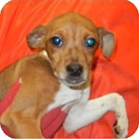 Adopt A Pet :: Cadence ADOPTED!! - Antioch, IL