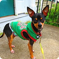 Adopt A Pet :: Weasel - Framingham, MA