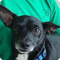 Adopt A Pet :: Taco - Erwin, TN