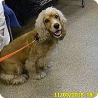 Adopt A Pet :: Wrigley - Cape Coral, FL