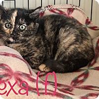 Adopt A Pet :: Alexa - Island Park, NY
