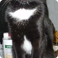 Adopt A Pet :: Frankie - Dallas, TX