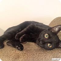Adopt A Pet :: Boo - Westchester, CA