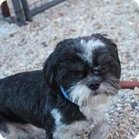 Adopt A Pet :: Ruffles - New Orleans, LA