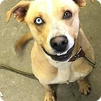 Adopt A Pet :: MARIE - Cadiz, OH