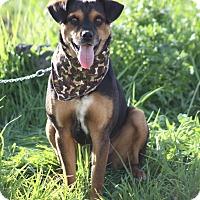 Adopt A Pet :: Jersey - Irvine, CA