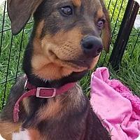 Adopt A Pet :: ACE - Rancho Cucamonga, CA