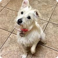 Adopt A Pet :: Lucy 109173 - Joplin, MO