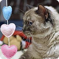 Adopt A Pet :: Freckles - Denver, CO
