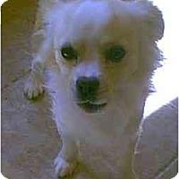 Adopt A Pet :: Jimmy - dewey, AZ