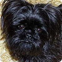 Adopt A Pet :: SOPHIE - ADOPTION PENDING - Little Rock, AR