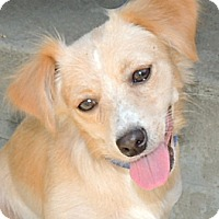 Adopt A Pet :: Molly - La Habra Heights, CA