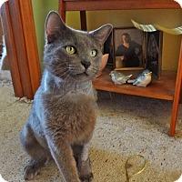 Adopt A Pet :: Coal - St. Louis, MO