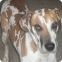 Adopt A Pet :: Diana - Antioch, IL