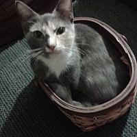 Adopt A Pet :: Pearly Baker - Ocala, FL