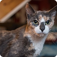 Adopt A Pet :: Lainie - Staten Island, NY