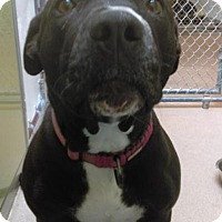 Adopt A Pet :: Abby - South Haven, MI