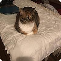Adopt A Pet :: Chi Chi (COURTESY POST) - Baltimore, MD