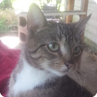 Adopt A Pet :: Audrey - Cincinnati, OH