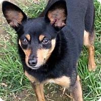 Adopt A Pet :: Jenna - Newport, KY