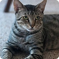 Adopt A Pet :: Juni - New York, NY