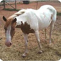 Adopt A Pet :: Meadow - Guthrie, OK