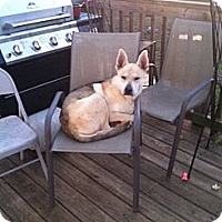 Adopt A Pet :: Rusty - Woodlawn, TN