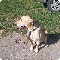 Adopt A Pet :: Ralph - Albany, NY