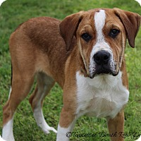 Adopt A Pet :: Tywin - Mount Juliet, TN