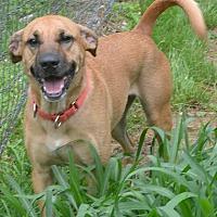 Adopt A Pet :: Eli - Afton, NY