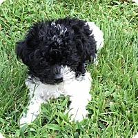 Adopt A Pet :: Ryder - Fairview Heights, IL