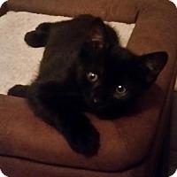 Adopt A Pet :: Olivia - Chino, CA