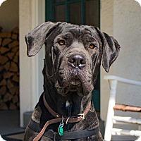 Adopt A Pet :: Knight - Florence, KY
